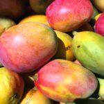 Mango to smaczny i zdrowy owoc
