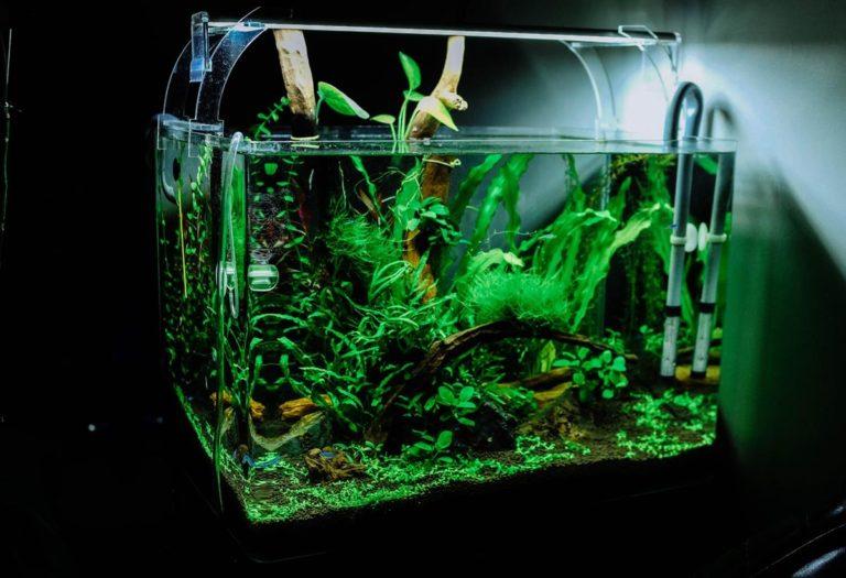 Co warto wiedzieć przed zakupem pierwszego akwarium?